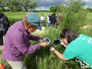 Citizen scientists at work; photograph by Sarah Foltz Jordan, Xerces Society